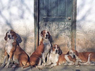 Orange County Hounds at Old Kennel by Joanne   Maisano