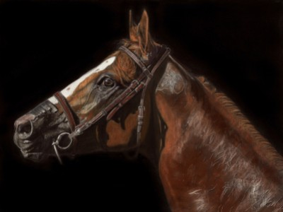 California Chrome - Awesome Again by Sue   Ziegler