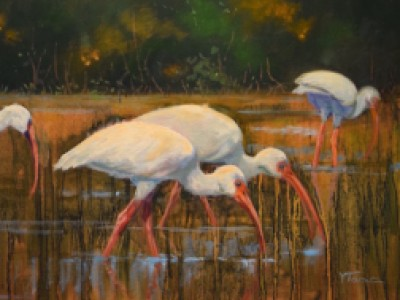 Ibis by Yvonne   Todd