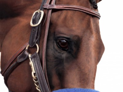 American Pharoah Portrait by Anne   Wolff