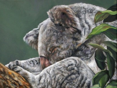 Koala by Cindy Billingsley