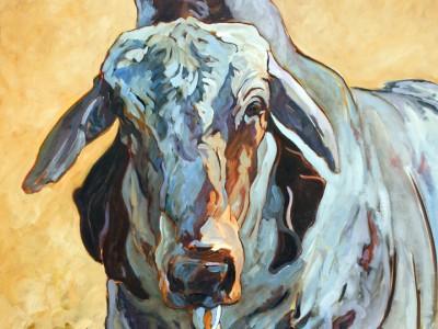 Brahman Bull, III