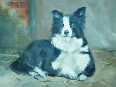 Border Collie by Cody Leeser