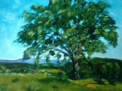 Hill School Elm by Sue Lyman