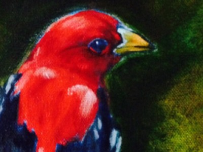 Scarlet Tanager by Sue Lyman