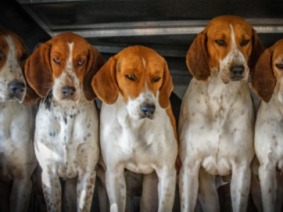 Five Hounds by Doug   Gehlsen