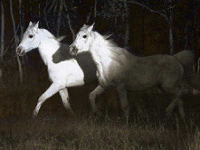 Three Horses by Sarah   Huntington